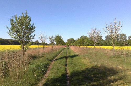 Läufer kurz vor Kleinbeeren