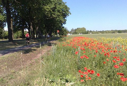 Läufer mit Mohnblumen am Wegesrand