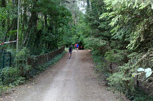 Läufer auf Weg zwischen Bäumen