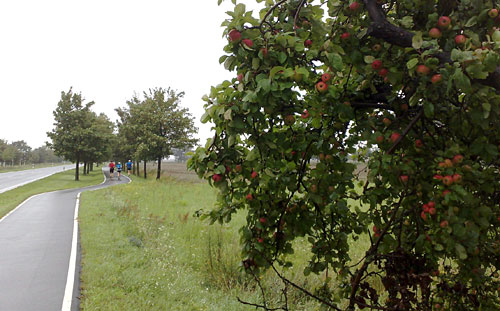 Apfelbaum am Wegesrand, im Hintergrund Läufer
