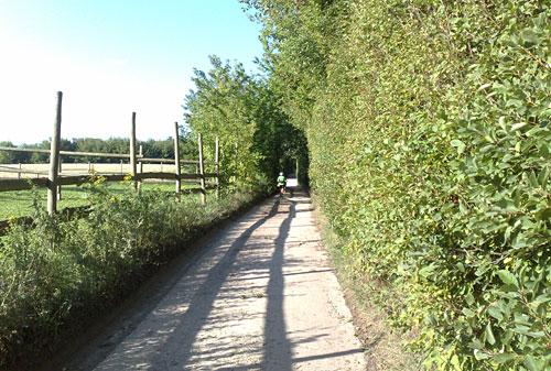 Weg zwischen Büschen und Koppel