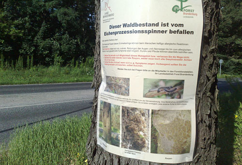 Warnplakat an einem Baum
