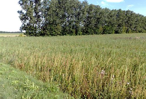 Feld mit Baumreihe im Hintergrund