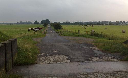 Blick auf die Wiesen hinter dem Deich mit Kühen und Pferden