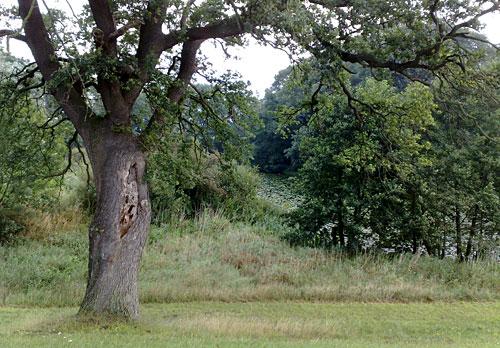 Baum und dahinter zwischen Büschen ein kleiner Teich