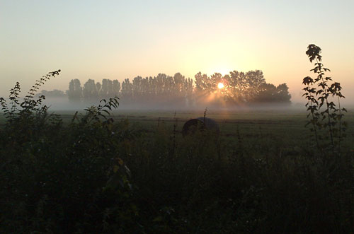 Sonnenaufgang und Nebel über Feld