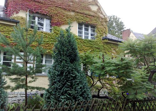 Mit Efeu bewachsenes Haus