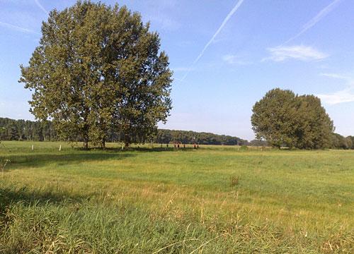 Läufer in Landschaft mit wiesen und großen Bäumen