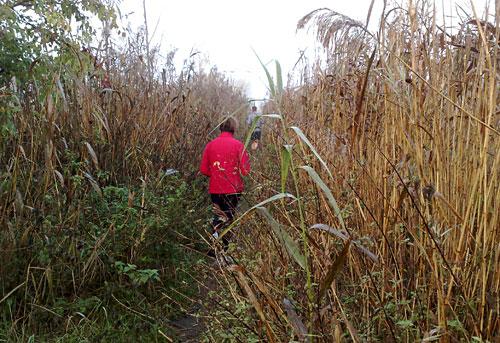 Läufer auf Pfad zwischen hohem Schilf