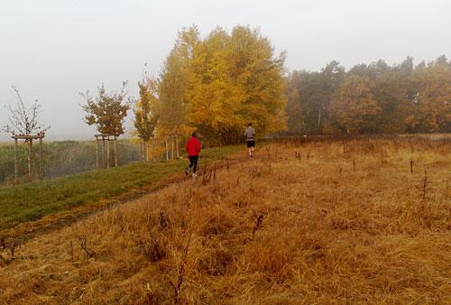 Läufer in orange-brauner Herbst-Landschaft
