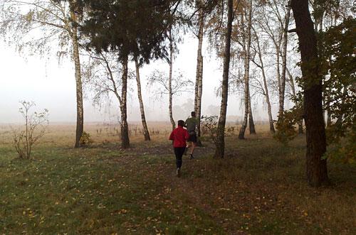 Läufer zwischen Birken, im Hintergrund Nebel
