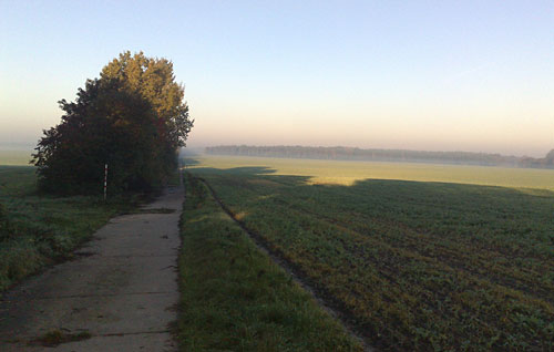 Plattenweg zwischen Feldern, dunstiger Morgenhimmel