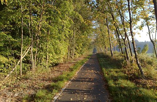 Radweg zwischen Bäumen, weit entfernt ein Läufer