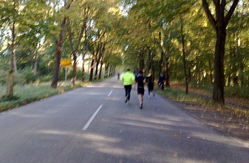 Läufer auf Asphaltstraße unter Bäumen