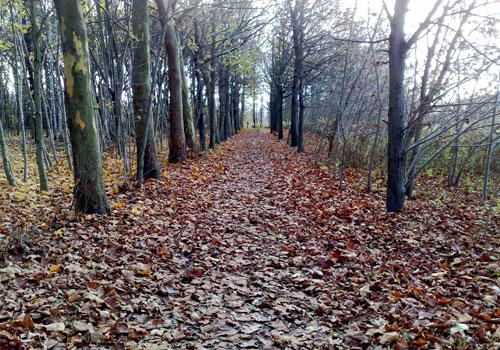 Weg zwischen Bäumen mit vielen Herbstblättern auf dem Boden