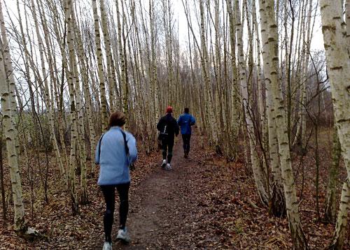 Läufer im Birkenwäldchen