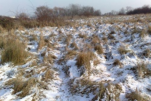 Schnee auf Wiesen mit hohem Gras