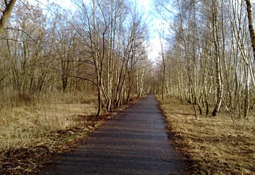 Mauerweg mit Sonne zwischen den Birken am Rande