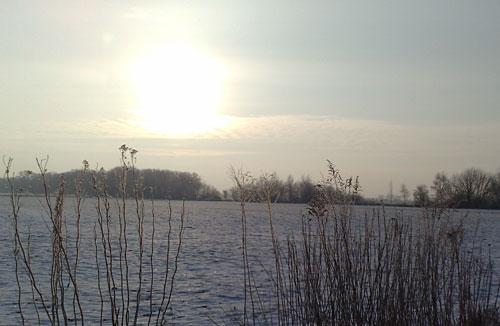 Gräser und schneebedecktes Feld im Gegenlicht