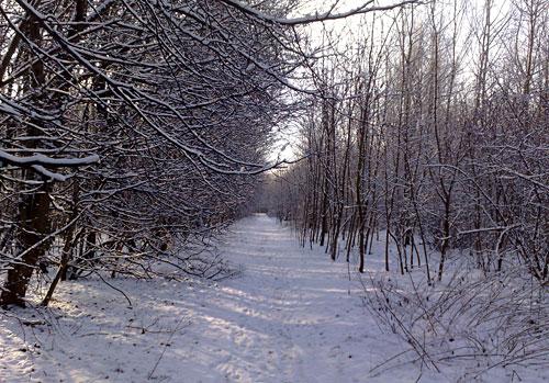 Verschneiter Weg im Wäldchen