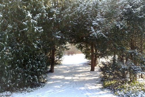 Verschneiter Parkweg