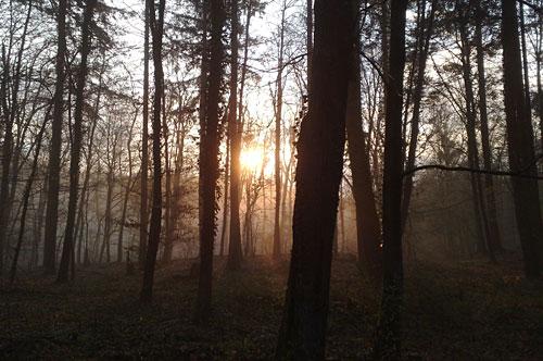 Aufgehende Sonne zwischen Bäumen
