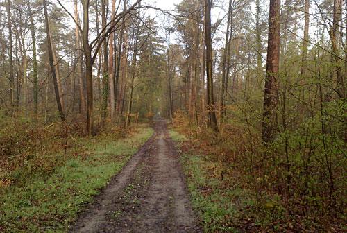 Waldweg im Karlsruher Hardtwald