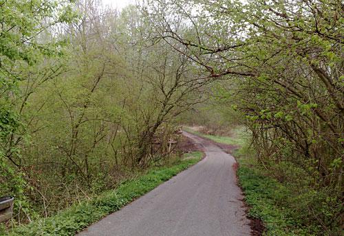 Weg mit grünen Büschen und Bäumen