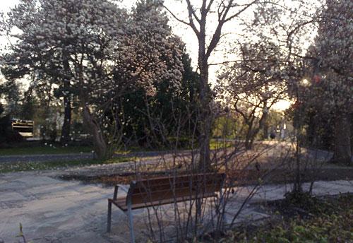 Blühende Bäume und Bank