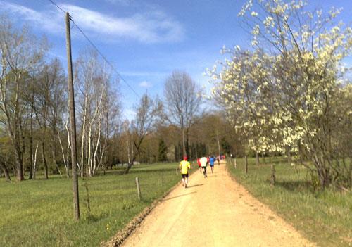 Läufer zwischen Wiesen mit blühenden Bäumen am Wegesrand