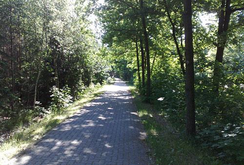 Radweg mit Bäumen