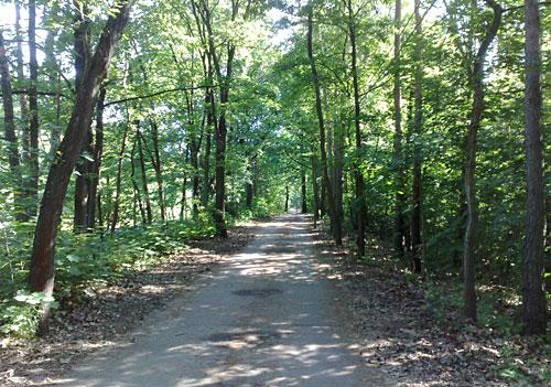 Radweg durch den Wald