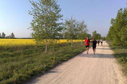 Läufer neben gelb blühendem Feld