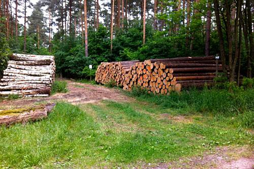 Baumstapel im Wald