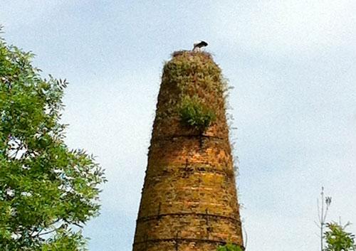 Storch im Nest auf einem Turm