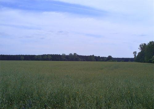 Großes, weites Feld