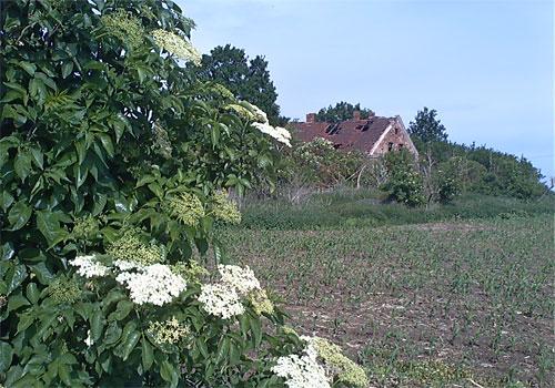 Verwunschenes altes Bauernhaus