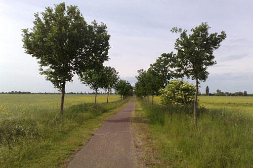Weg mit Bäumen und Feldern