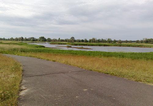 Weg auf dem Oderdeich mit Wiesen