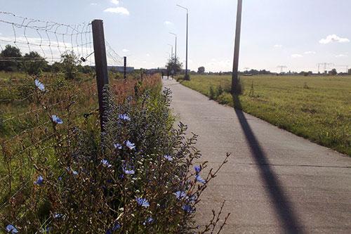 Sommerblumen am Wegesrand