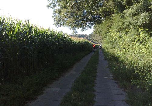 Läufer zwischen Maisfeld und Wäldchen