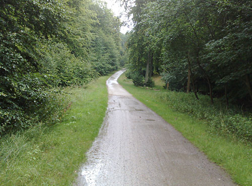 Waldweg im Regen