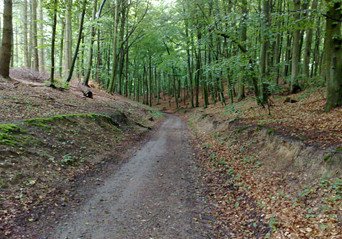 Waldweg kurz vor Sellin