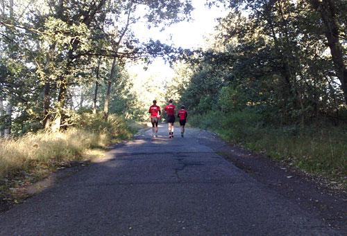 Läufer auf asphaltiertem Weg zwischen Bäumen