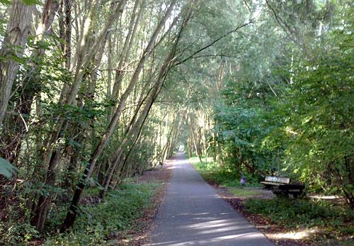 Von Bäumen überdachter Weg (Mauerweg am Teltowkanal)