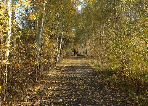 Läuferin und Läufer auf dem Mauerweg zwischen herbstlich gelben Bäumen