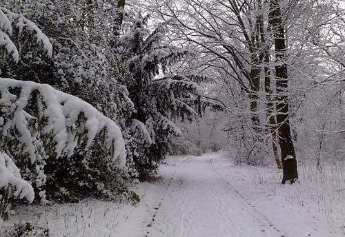 Gutspark Marienfelde im Schnee