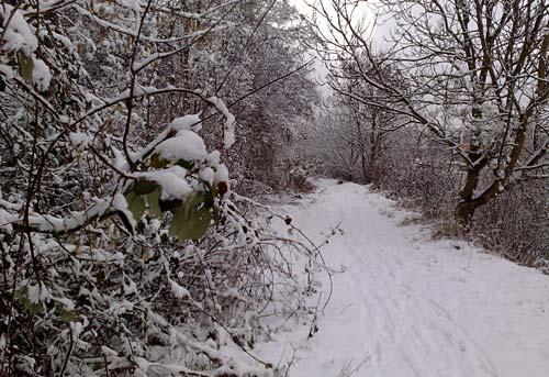 Lauf hinunter vom winterlichen Schlehenberg