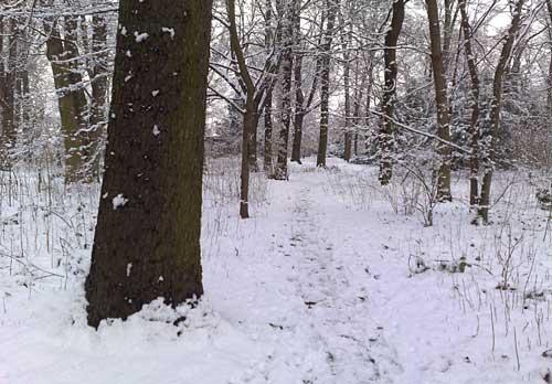 Winter-Landschaft im Gutspark Marienfelde