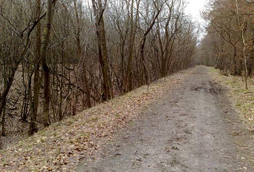 Waldweg am Mahlower Seegraben